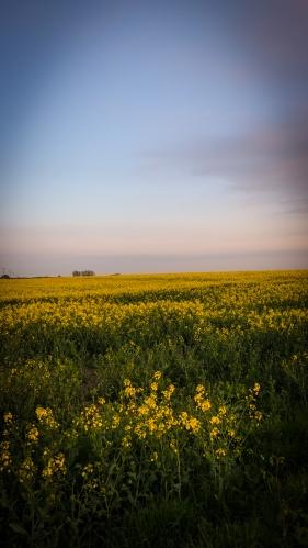 Fields Arond